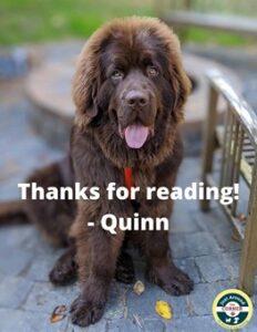 JAC Mascot Quinn, brown Newfie