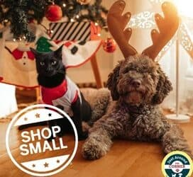 Local Holiday Shopping for Your Pets: Plymouth, MA