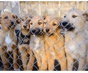 5 Easy Ways to Help a Local Animal Shelter