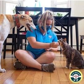 JAC employee feeding a cat and dog treats.