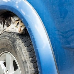 Cat hiding in car wheel to stay warm during the winter
