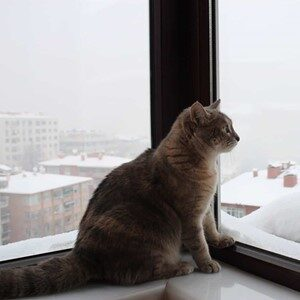 A cat sitting on a windowsill inside to keep warm during winter