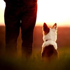 Dog and their owner watching the sunset