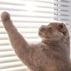 A cat playing with a cord of a set of blinds