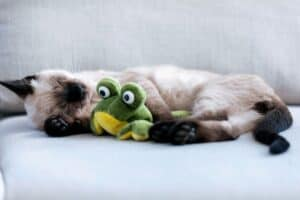 calm kitty with frog toy