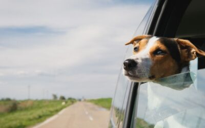 5 Dog-friendly vacation spots in New England