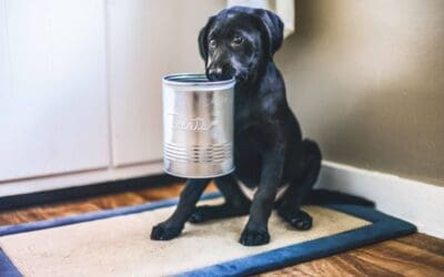 Xylitol and its Effects on Dogs